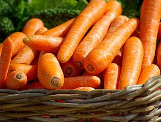 Обізвалася морквиця - гарбузовая сестриця