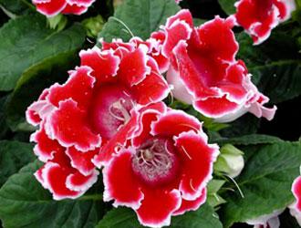 Квіти на вікні - радість для душі