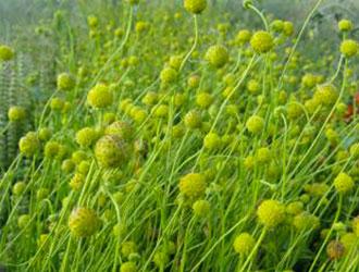 Замість грибів - трава