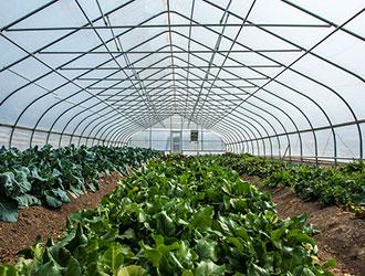 Лютий - активний час для вирощування розсади для утепленого та відкритого грунту