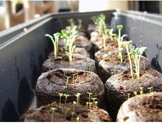 Готуємось вирощувати розсаду. Частина 1. Посуд для розсади