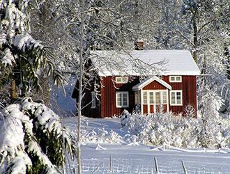 Чим зайнятись городникам та садівникам у січні