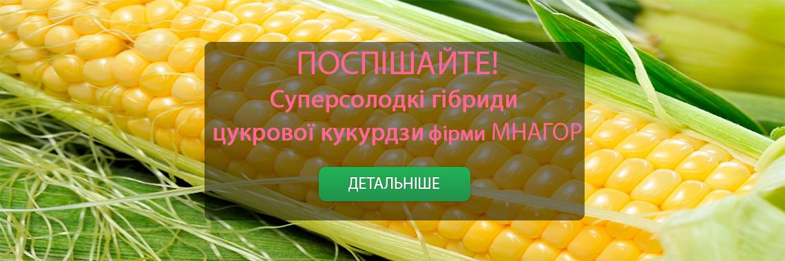 Цукрова кукурудза Мнагор