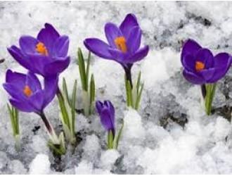 """""""Марець спочатку хмарний, в середині болотний, – сніп буде намолотний…"""""""