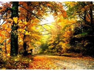 """""""Прийшла осінь - в гості просить"""""""