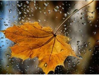 """""""Листопад – ще один осінній крок до зими"""""""